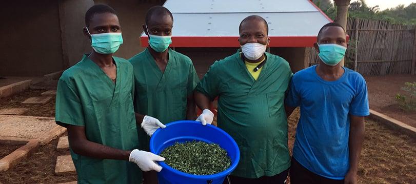 François Akouta und seine Mitarbeitenden zeigen die getrockneten Moringablätter.